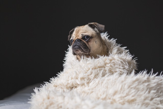 a dog wrapped in a rug